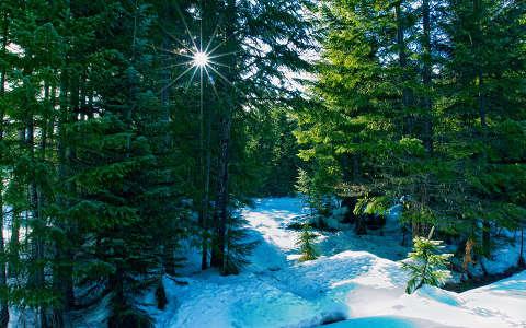 Tél az erdőben