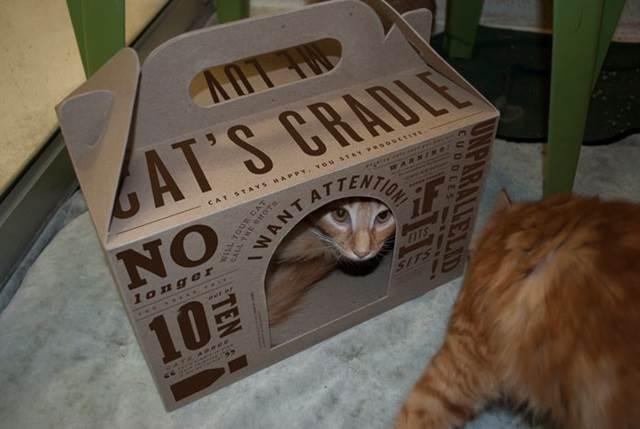 kucing comel dalam kotak
