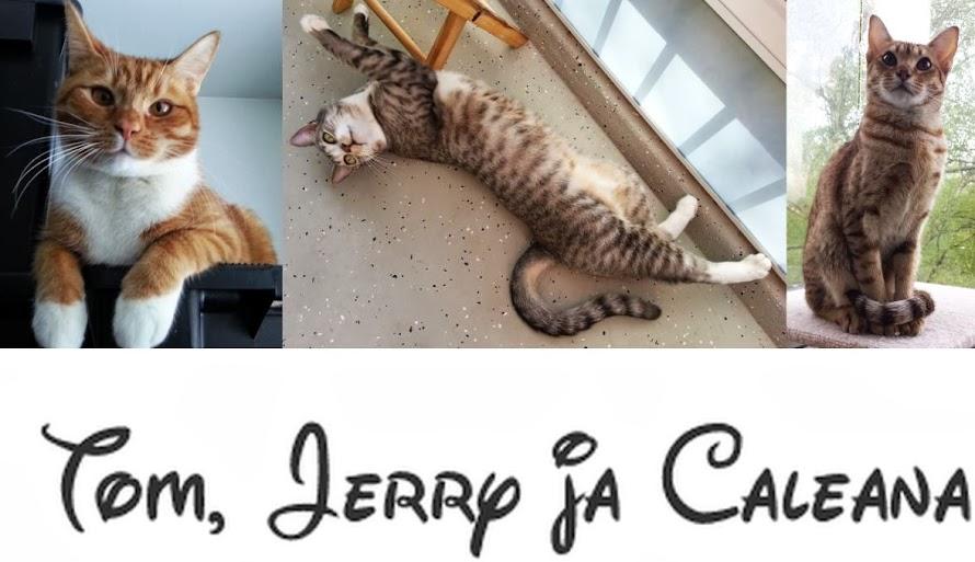 Tom, Jerry ja neiti Caleana