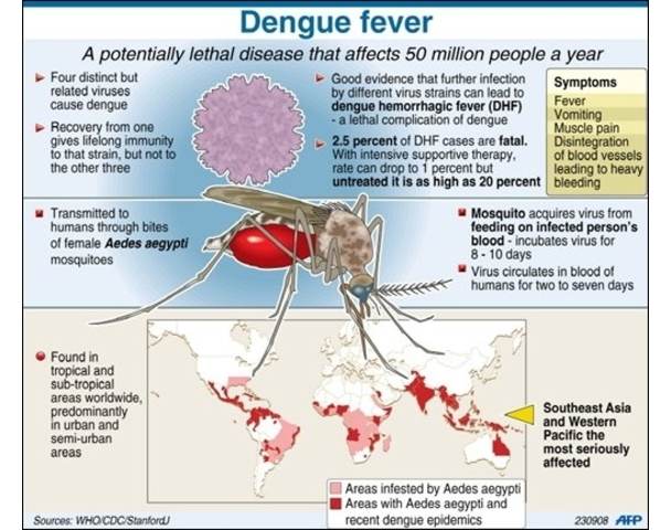 the signs symptoms and treatment of yellow fever Signs and symptoms a first phase of symptoms is characterised by flu-like symptoms including there is no specific treatment for yellow fever supportive care to treat dehydration and symptomatic relief of pain may be required prevention.