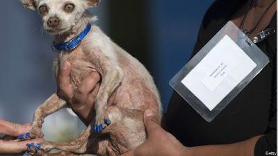 Estos son los perros más feos del mundo