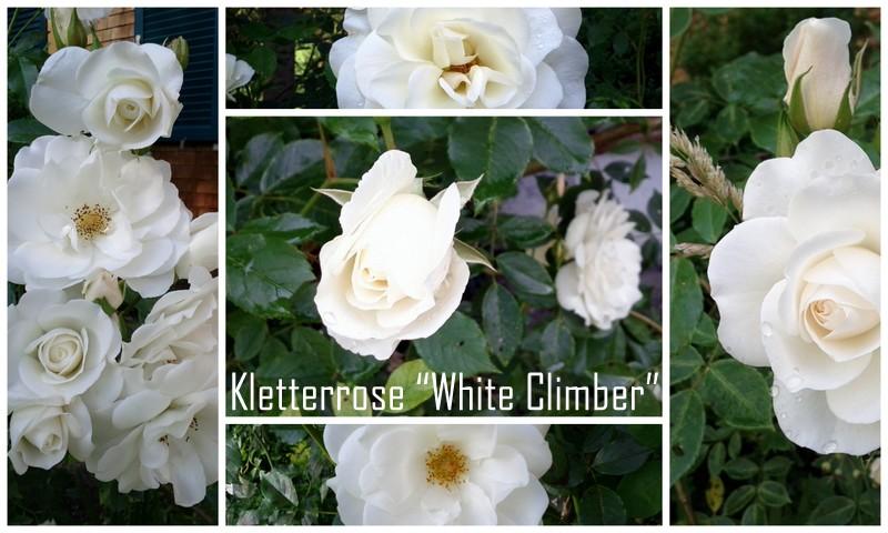 friday flowerday mit meiner white climber tag f r ideen. Black Bedroom Furniture Sets. Home Design Ideas
