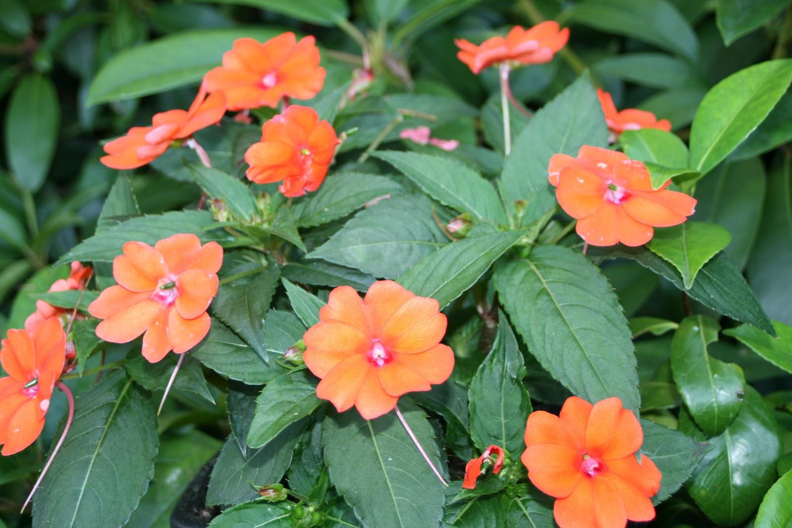 Pin bouquet fleur lys de fleurs comparer les prix avec on for Le prix des fleurs