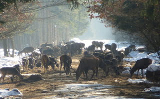 Wildfütterungstelle im Forstenrieder Park