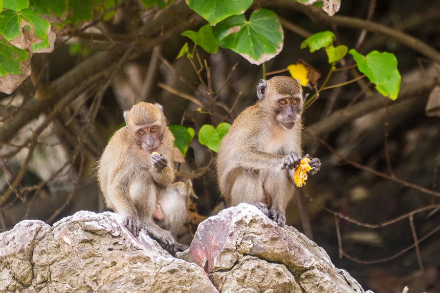 Wild Monkeys and View Point