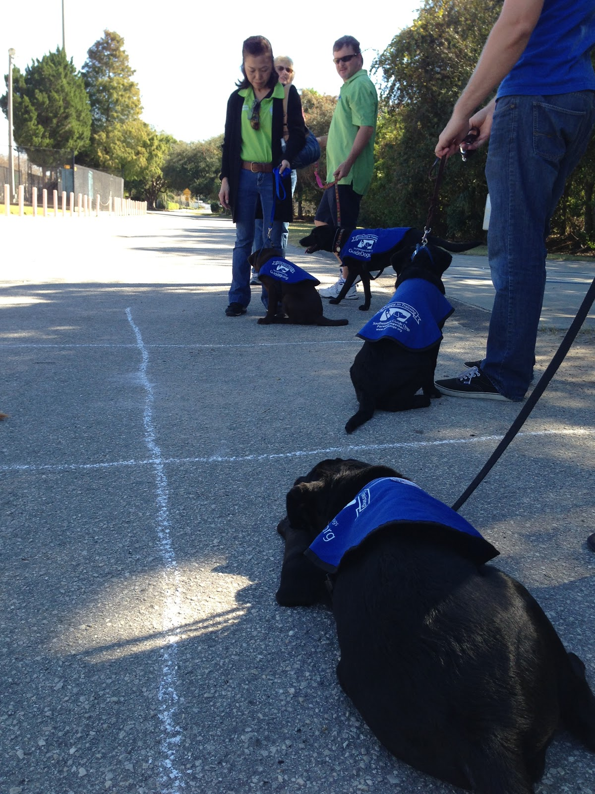 Group Obedience Games: Fun for You, Fun for Fido