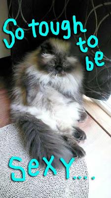 cat-sexy-pose-02