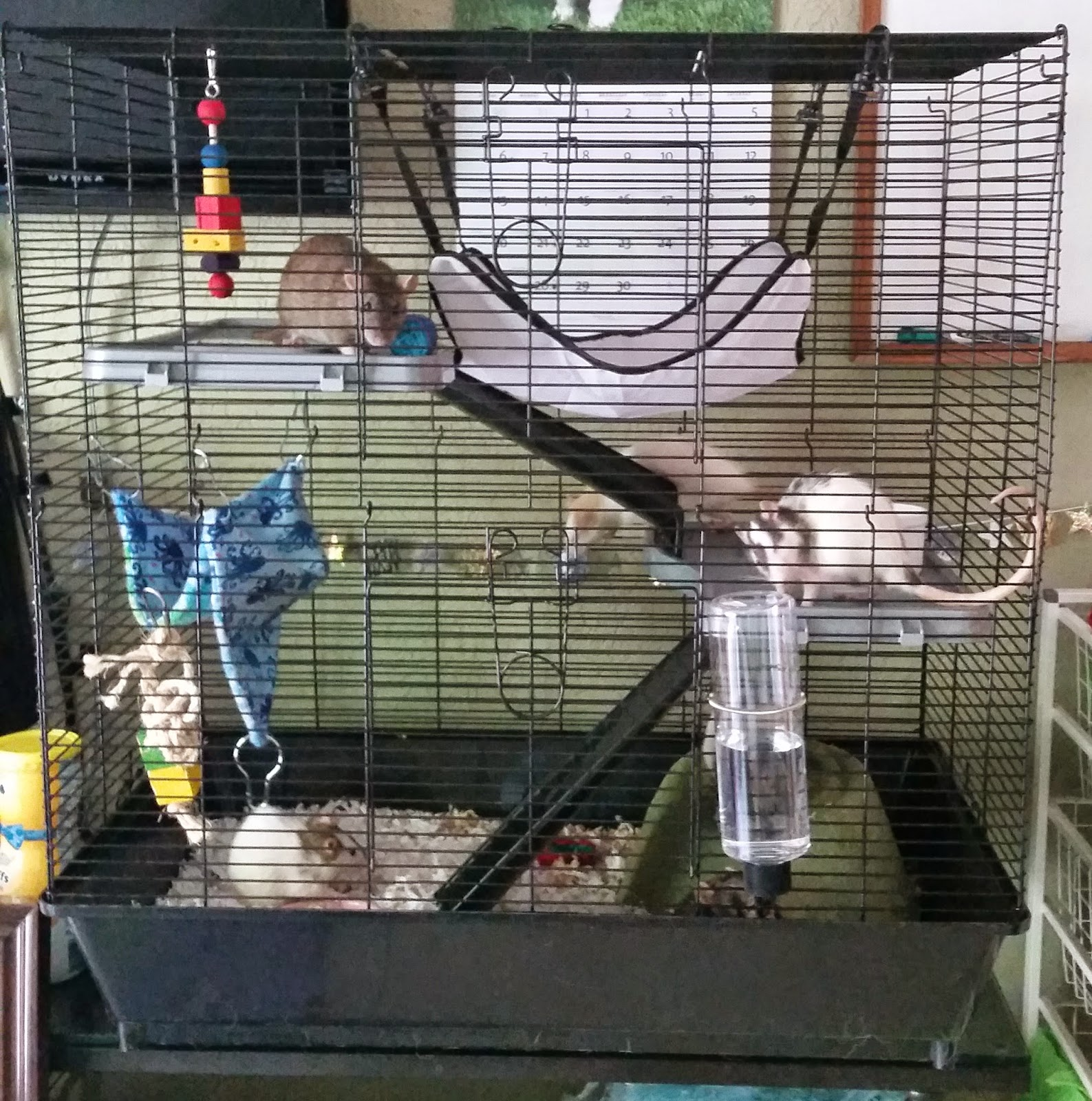 fruiit pawnch 39 s rat blog cage review all living things. Black Bedroom Furniture Sets. Home Design Ideas