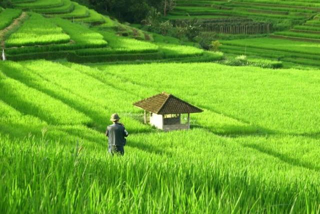 kebahagiaan seorang petani cerita inspirasi the n
