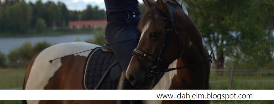 Ida Hjelm - En blogg med hästar och träning i fokus