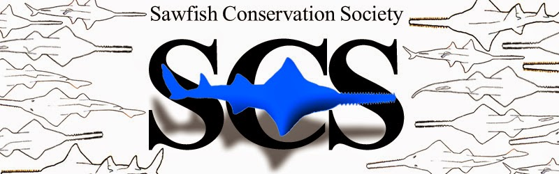 Sawfish Conservation Society