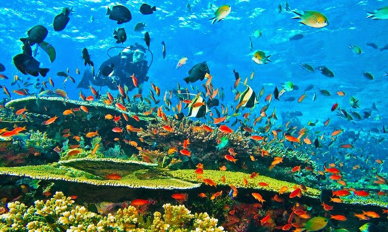 Menikmati Keindahan Pulau Pramuka Harga Murah? Pesan Paketnya Di Sini