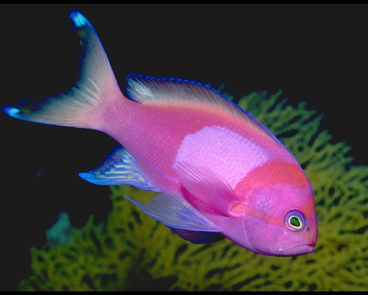 http://2.bp.blogspot.com/-5E6oeh3uMxs/UI4tG3WTAtI/AAAAAAAAA9k/77pdF_iYbnE/s1600/Beautiful-Life-of+Fish.jpg