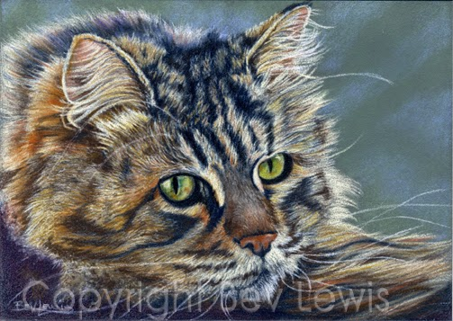 animal artistry by bev lewis cat on ampersand pastelbord