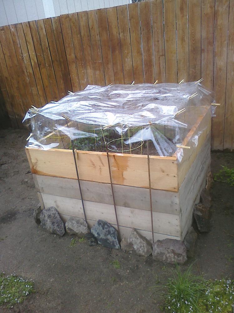 Backyard Farming: My Square Foot Gardens