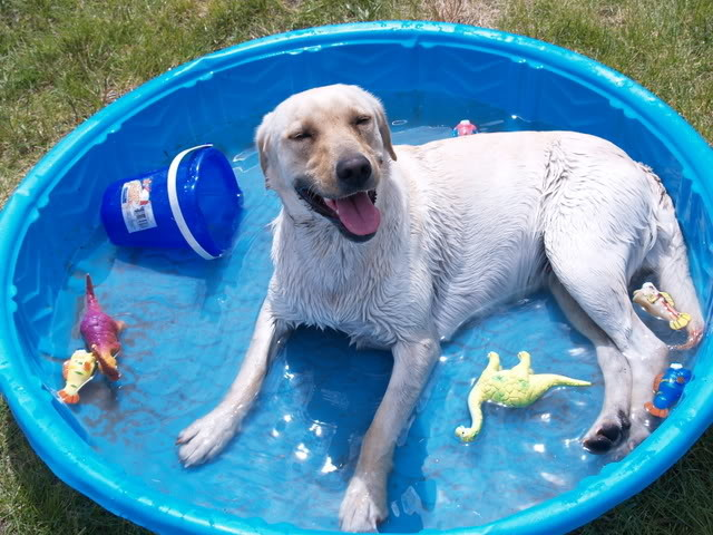 cat, dog, pet, Pet Care in Summertime, pets,