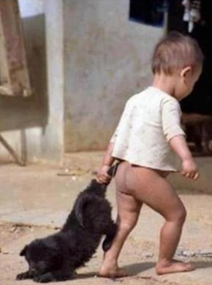 funny picture: child pulls dog's tail
