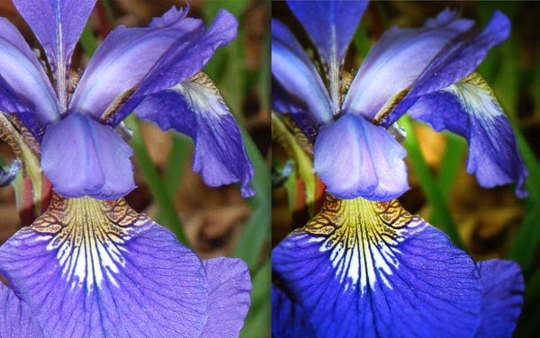 Lomo Style Effect in Photoshop Applied To Photos Of Iris Flowers