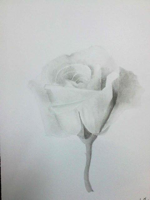 aguada de tinta china una rosa