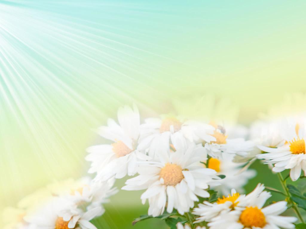 Vintage Flowers Wallpapers Hd Pictures - Beautiful 3D Vintage Flowers