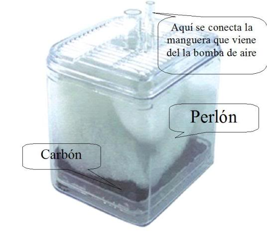 Tipos de filtraci n para acuarios for Filtro para pecera