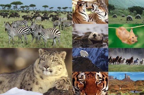 Fotografías de animales tiernos y salvajes II (10 fotos)
