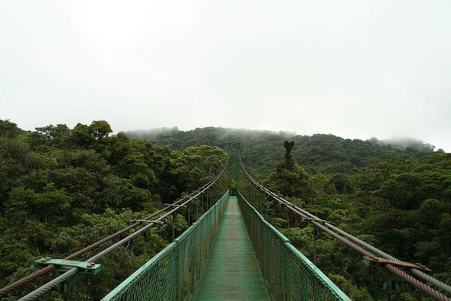 Puente sobre el dosel arbóreo de la Reserva biológica Bosque Nuboso Monteverde, Costa Rica.