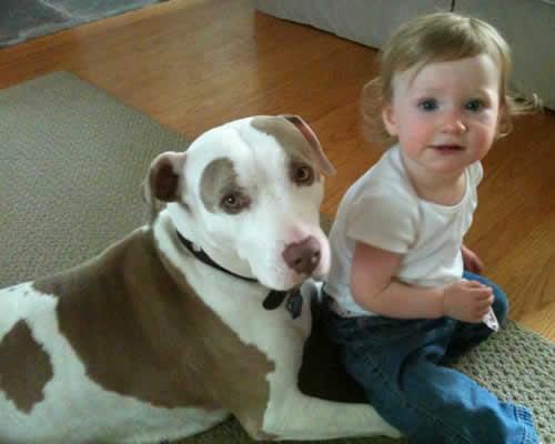 Quero um lar pit bull para estimar ou extinguir - Cenas para bebes de 15 meses ...