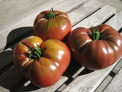 three beefsteak tomatoes in sunlight