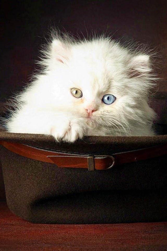 Cat Animal Mobile