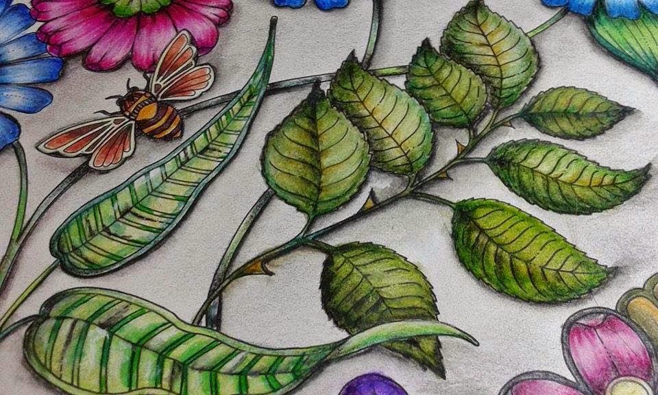 ideias para pintar livro jardim secreto : ideias para pintar livro jardim secreto:28 de maio de 2015