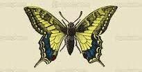 cuento chino sueño de la mariposa