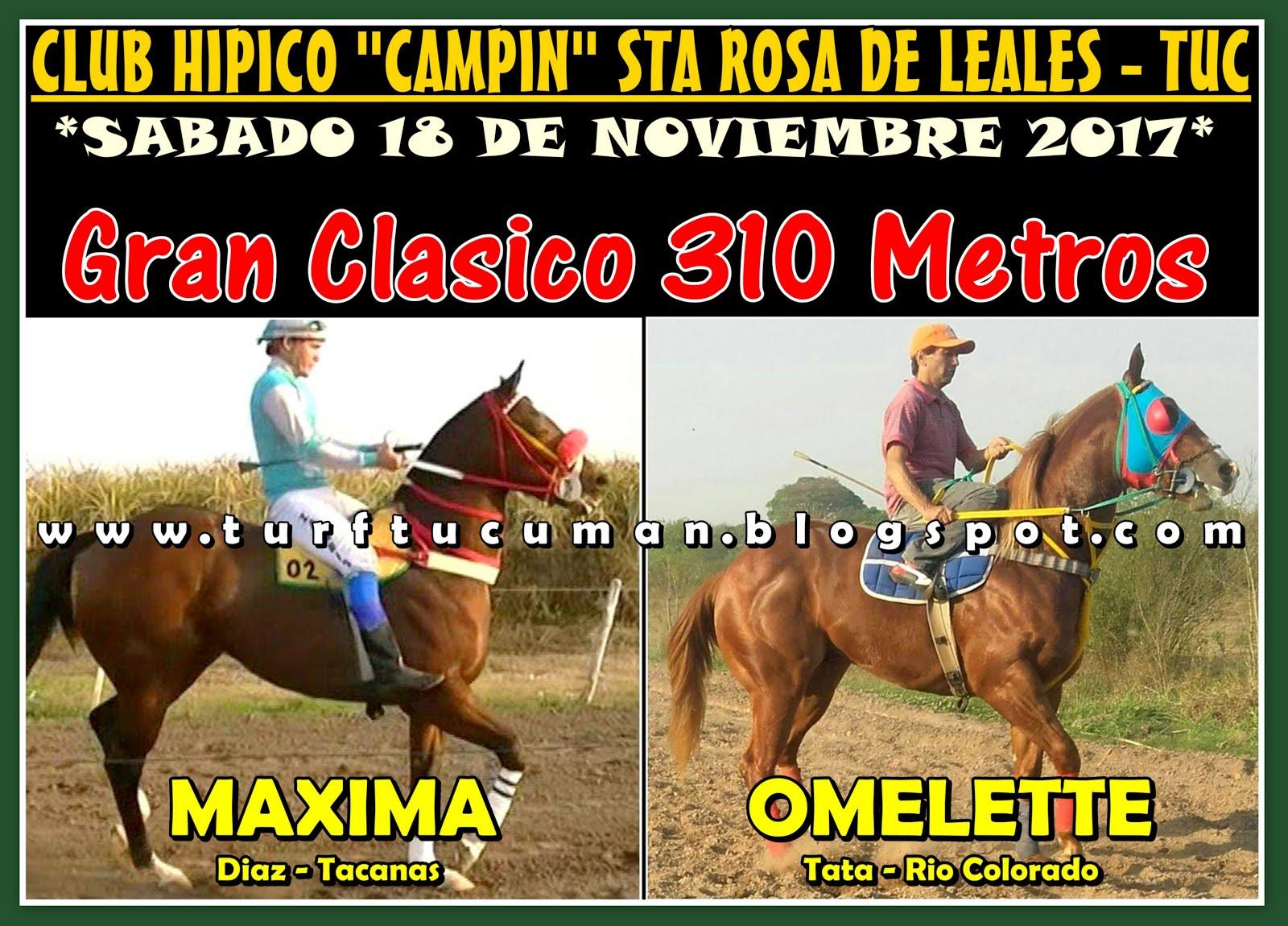 MAXIMA VS OMELETTE