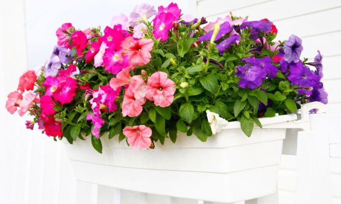 Simplyfiesta ideas f ciles para peque as fiestas - Jardineras de colores ...