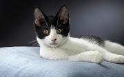 Your Wallpaper: Cute Cat Wallpaper