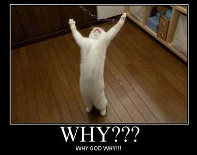 cat+oh+God+why.jpg