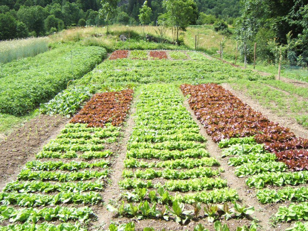 Terra capitale l 39 equilibrio dell 39 orto - L orto in giardino ...