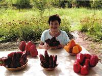 как вырастить крупный перец, как получить большой урожай перца, болезни перца, перец  сладкий