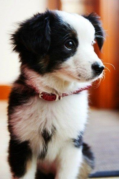 Wooo cute puppy looking awsome