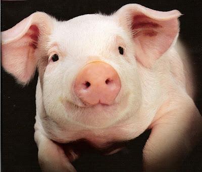 http://2.bp.blogspot.com/-5FuJVqFxsb4/Ug1SyLWuRSI/AAAAAAAAE1k/kYnqteYGjrk/s1600/Pig_Farming.jpg