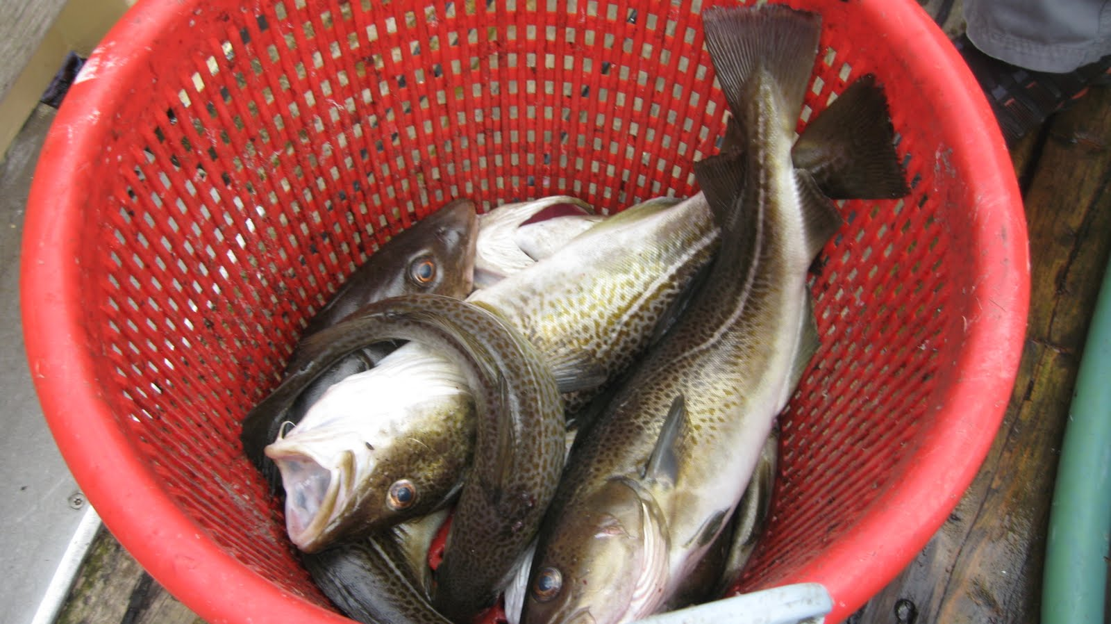 jaws fiskekutter