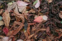 Dry leaves and autumn colors texture package