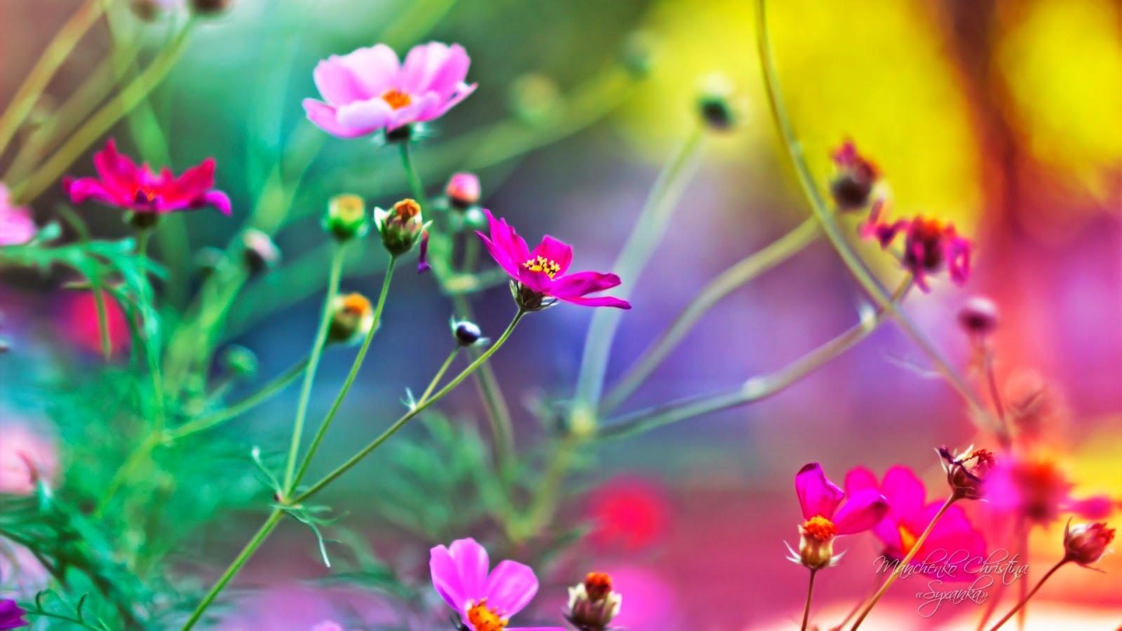 kamal shah: hd flowers wallpapers free
