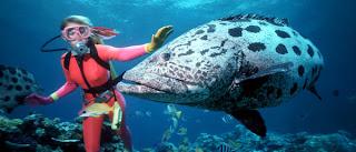 Great Barrier Reef Australia, diving in Great Barrier Reef