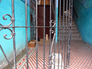 Santiago de Cuba iron gate interior with two cats