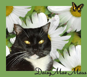 RIP Daisy Mae Maus