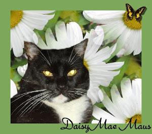 RIP Daisy Mae Maus