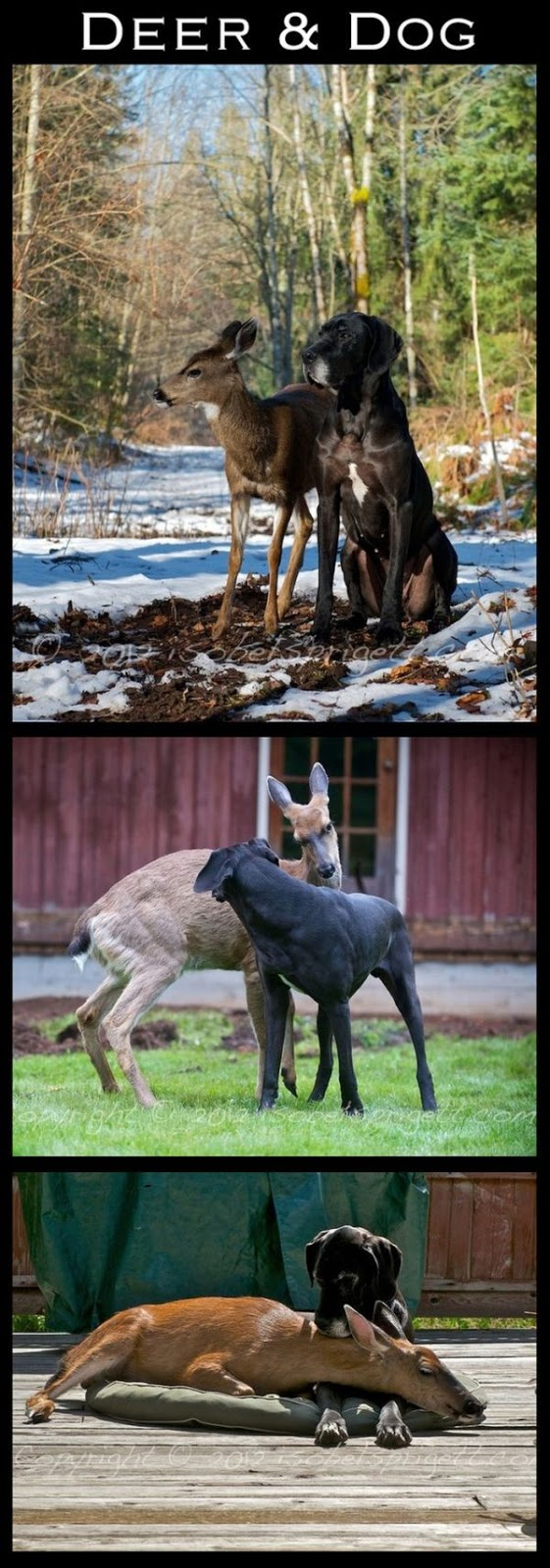 cute animal friends, interspecies friendships, animal pictures