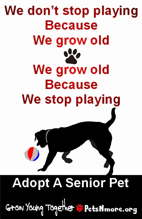 dog, cat, pet, animal, senior pet, adopt, www.petsnmore.org, grow old