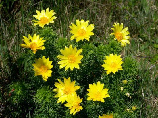 Piante e fiori dicembre 2012 for Fiori che sbocciano